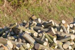 Pile de bois de chauffage de saule photographie stock libre de droits