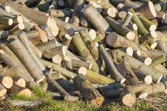 Pile de bois de chauffage de saule photos stock