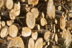 Pile de bois d'hiver ou d'automne photos stock