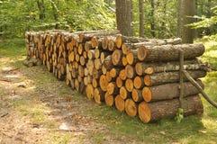 Pile de bois dans la forêt Photo libre de droits