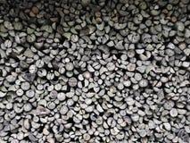 Pile de bois dans la forêt Image libre de droits
