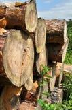 Pile de bois dans une forêt. Photos stock