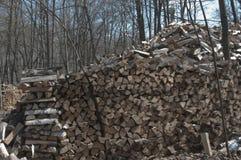 Pile de bois dans une forêt Photographie stock libre de droits