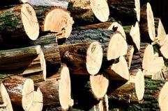 Pile de bois de chêne avec un papillon Photo stock