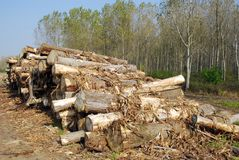 Pile de bois de chauffage Images libres de droits