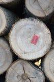 Pile de bois de chauffage Images stock