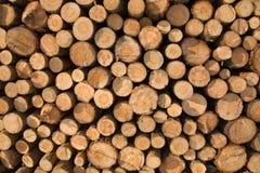 Pile de bois de chauffage conifére image stock