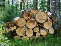 Pile de bois de chauffage dans la forêt Image stock