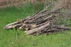 Pile de bois de chauffage sur l'herbe Photographie stock