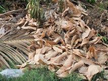 Pile de branche d'arbre photos libres de droits