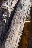 Pile de composition de branches d'arbre photographie stock libre de droits