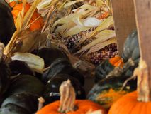 Pile de courge et de maïs photos stock