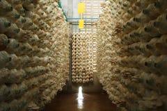 Pile de cubes en champignon dans une ferme étroite Photos libres de droits