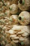 Pile de cubes en champignon dans une ferme étroite Images stock