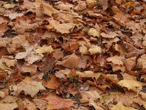 Pile de feuille des feuilles de Brown image libre de droits