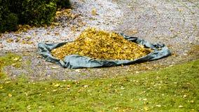 Pile de feuille sèche d'automne sur le plancher dans le jardin images stock