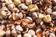 Pile de fibre de coco de noix de coco Image stock