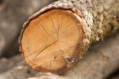 Pile de forêt d'identifiez-vous de chêne photographie stock libre de droits