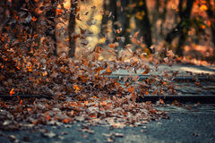 Pile de fort vent de feuilles Photo stock