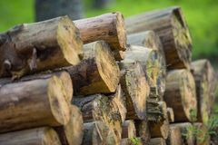 Pile de grands rondins en bois Images stock
