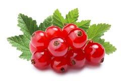 Pile de groseille rouge (rubrum de Ribes), chemins Image stock