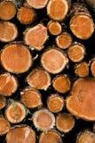 Pile de jeunes arbres de pin sciés Images libres de droits