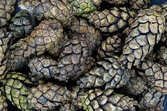 Pile de la surface sèche de fond de cônes de pin Images libres de droits