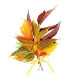 Pile de lames d'automne avec des baies Images stock
