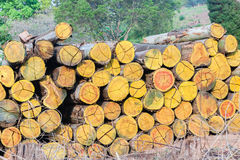 Pile de Loggging d'arbres Photographie stock libre de droits