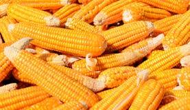 Pile de maïs Photos stock