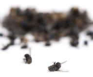 Pile de mouches et de guêpes de morts, d'isolement Photo libre de droits