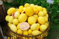 Pile de pastèque rouge avec la coquille jaune sur le panier en osier photos libres de droits