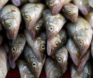 Pile de poissons Photographie stock