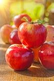 Pile de pommes rouges mûres fraîches sur la table en bois dans le jardin images libres de droits