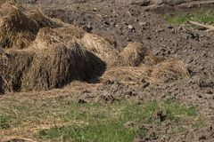 Pile de riz image libre de droits