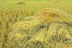 Pile de riz Photo libre de droits
