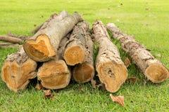 Pile de rondin d'arbre en caoutchouc Image stock