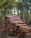 Pile de rondin dans la forêt - société de notation photo libre de droits