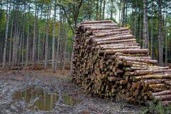 Pile de rondin dans la forêt - société de notation photos libres de droits
