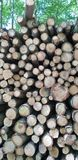 Pile de rondin dans une forêt photo libre de droits