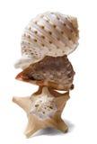 Pile de Seashell au-dessus de blanc Images libres de droits