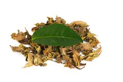 Pile de thé vert photo stock