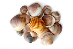 Pile de vue supérieure colorée de coquillages photos libres de droits
