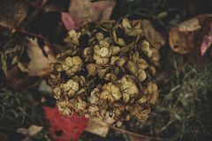A pile of dead leaves of a plant royalty free stock photography