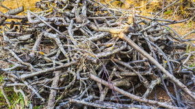 A pile of deadwood, Royalty Free Stock Photo