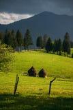 Pile del fieno su terreno coltivabile Fotografia Stock