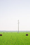 Pile del fieno sul campo verde Fotografia Stock