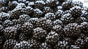 Pile of delicious blackberries royalty free stock image