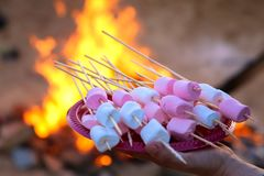 pile of delicious and sweet marshmallows on a stick in the background of a campfire stock photo
