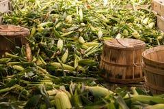 Pile des épis de blé verts avec les cosses et la soie photo libre de droits